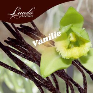 Înghețată artizanală de vanilie